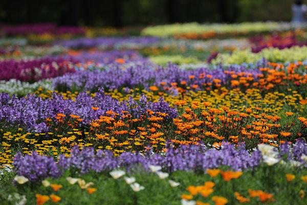 花のパッチワーク2