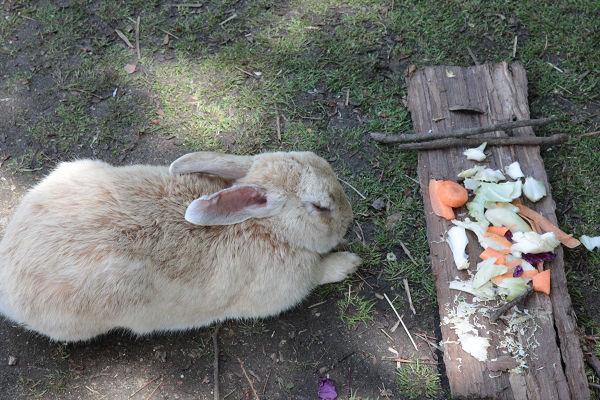 ウサギの前の食べ物