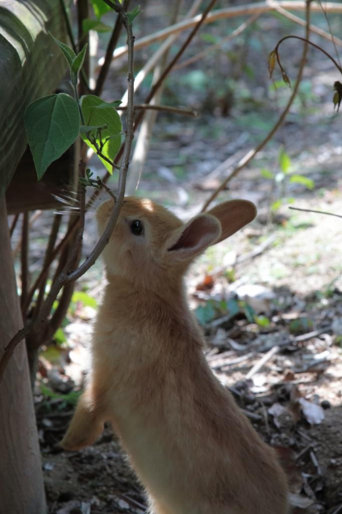 茶色ウサギ背伸び