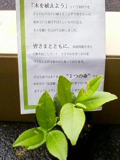 P2010_1117_085912.JPG