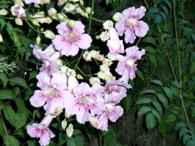 11.10.20植物04