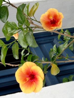 11.10.20植物06