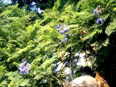 11.10.20植物07