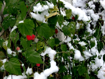 12.01.24雪と花01