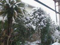 12.02.29雪02