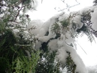 12.02.29雪03