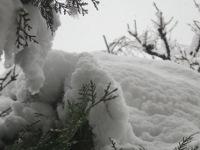 12.02.29雪04