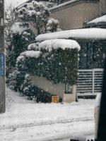 12.02.29雪05