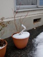 12.02.29雪07
