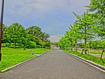 12.07.15立川昭和記念公園01