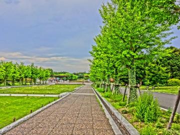 12.07.15立川昭和記念公園02