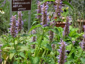 12.07.15立川昭和記念公園42