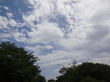 12.07.15立川昭和記念公園44