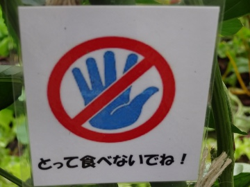 12.10.08井の頭公園91