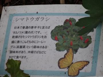 12.10.08井の頭公園92