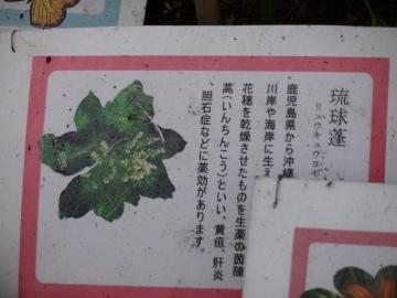 12.10.08井の頭公園94