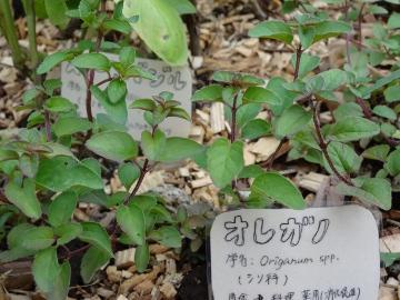 12.10.08井の頭公園106