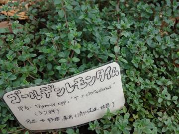 12.10.08井の頭公園109