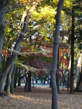 12.12.01小金井公園02