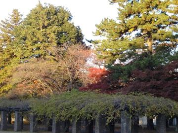12.12.01小金井公園06