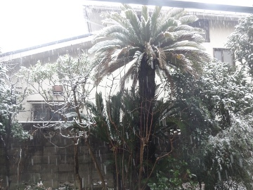 13.01.14初雪01
