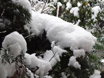 13.01.14初雪12