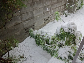 13.01.14初雪13