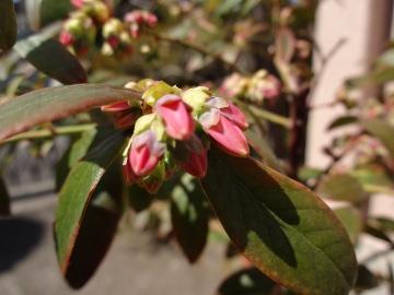 13.03.19春の花01