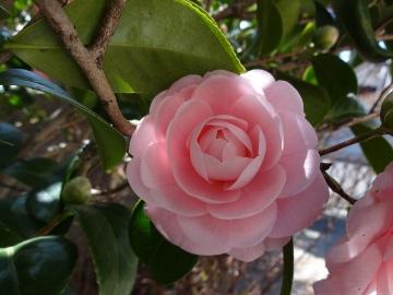 13.03.19春の花03