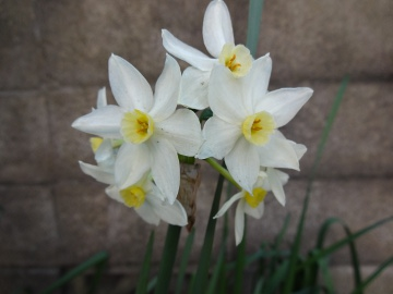 13.03.19春の花04