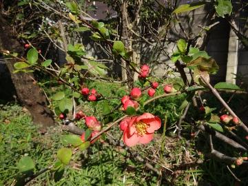 13.03.19春の花06