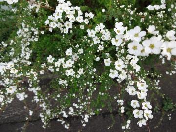 13.03.19春の花15
