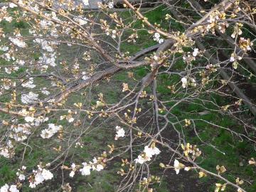 13.03.19春の花16