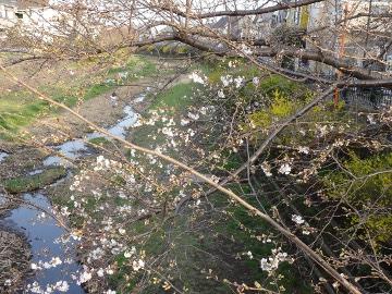 13.03.19春の花17