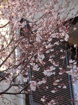 13.03.19春の花19