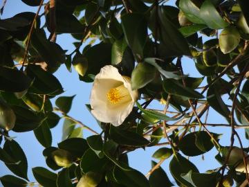 13.03.19春の花21