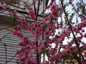 13.03.19春の花22