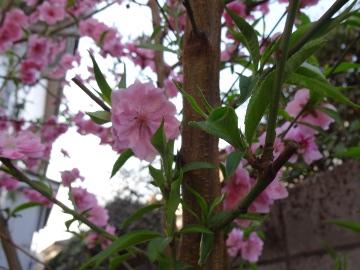 13.03.19春の花23