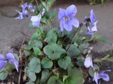 13.03.19春の花24