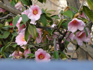 13.03.19春の花25