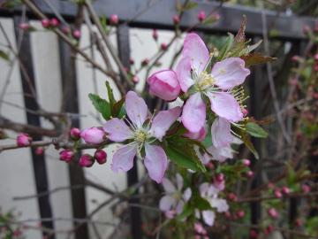 13.03.19春の花26