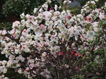 13.03.19春の花27