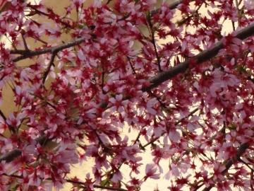 13.03.19春の花28
