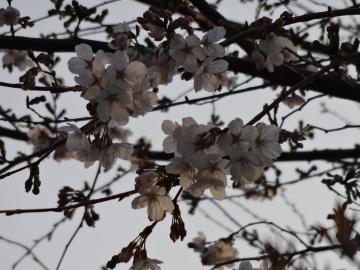 13.03.19春の花33