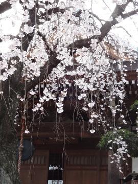 13.03.19春の花34