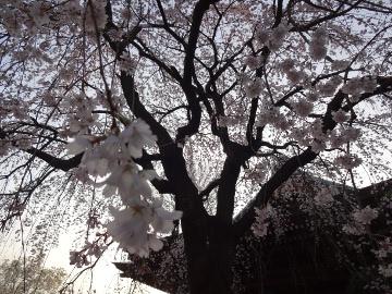 13.03.19春の花35