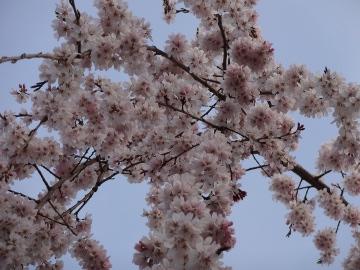 13.03.19春の花37