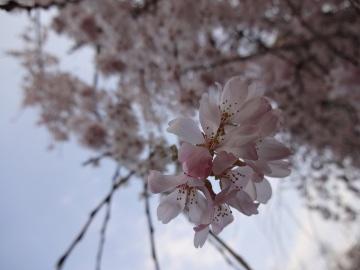 13.03.19春の花38