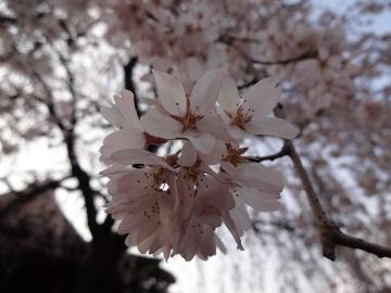 13.03.19春の花39