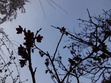 13.03.19春の花40
